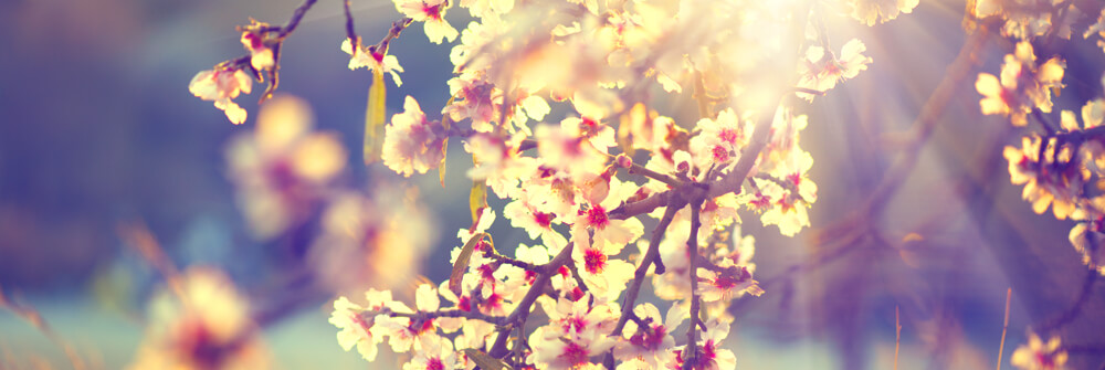 Papier Peint Panoramique pour une sensation de printemps
