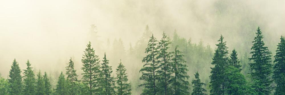 Papier Peint Panoramique Brouillard