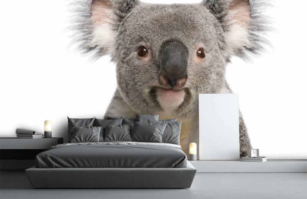 Other - Photo d'un koala - Chambre des enfants 1