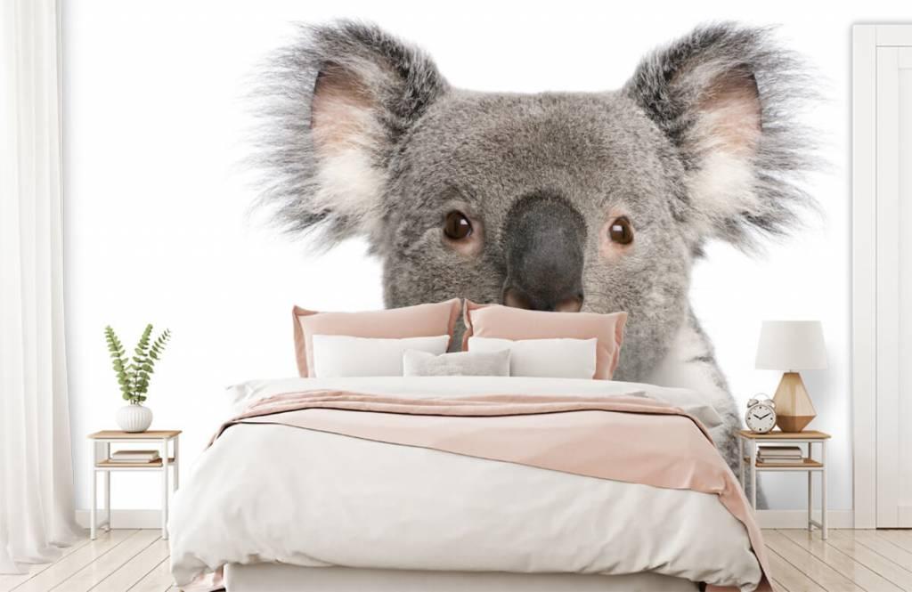 Other - Photo d'un koala - Chambre des enfants 2