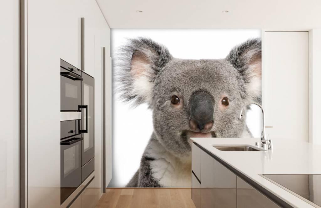 Other - Photo d'un koala - Chambre des enfants 3