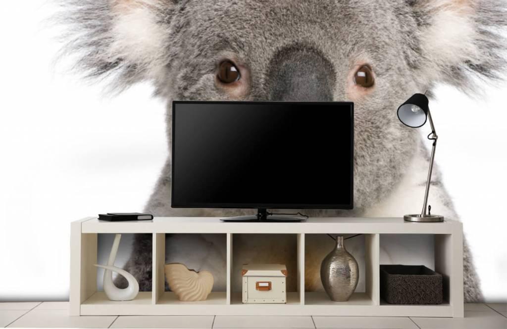 Other - Photo d'un koala - Chambre des enfants 4