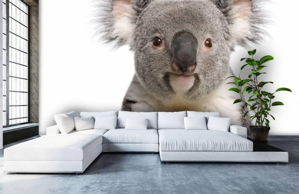 Other - Photo d'un koala - Chambre des enfants 5