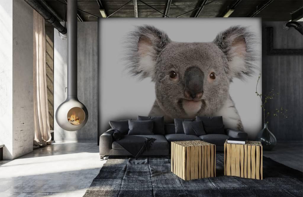 Other - Photo d'un koala - Chambre des enfants 6