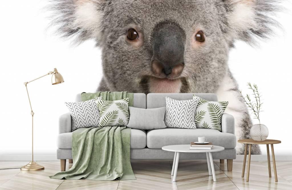 Other - Photo d'un koala - Chambre des enfants 7