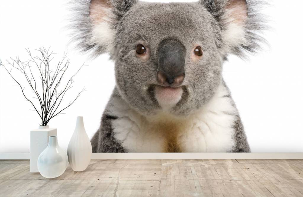 Other - Photo d'un koala - Chambre des enfants 8