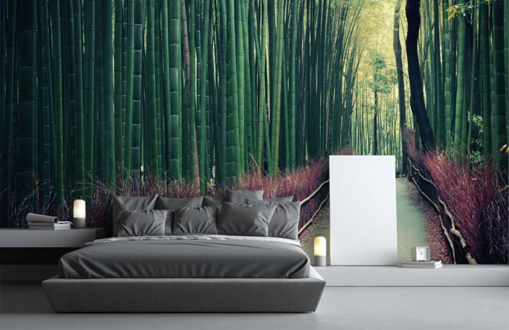 Papier peint de la forêt - Forêt de bambous - Hall d'entrée 2