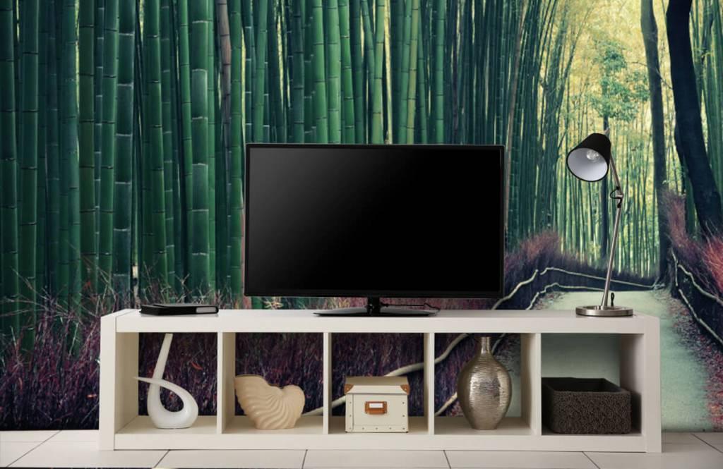 Papier peint de la forêt - Forêt de bambous - Hall d'entrée 4