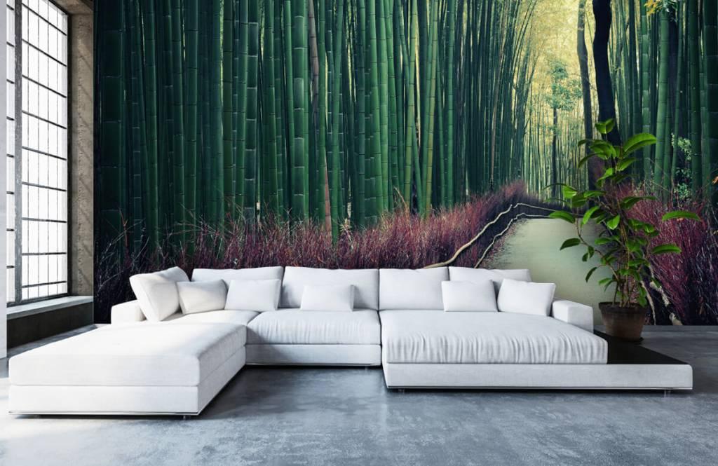Papier peint de la forêt - Forêt de bambous - Hall d'entrée 5