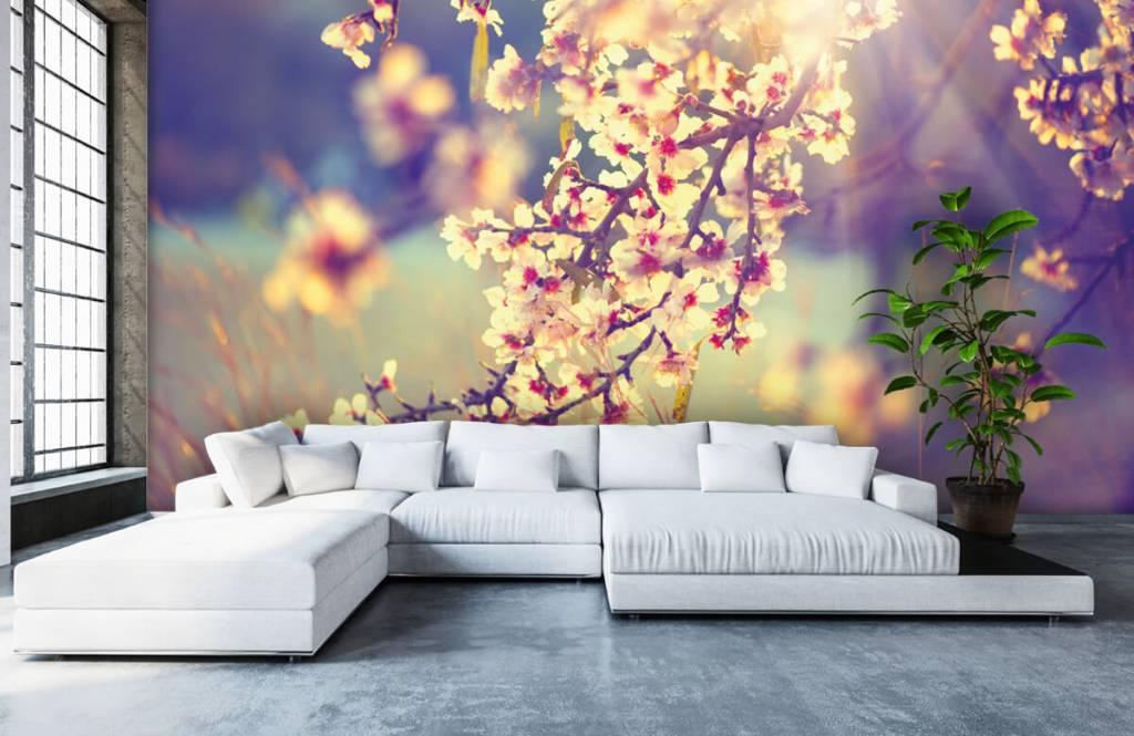 Blossom - Arbre à fleurs - Chambre à coucher 6