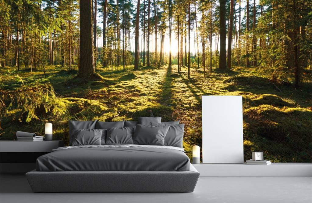 Papier peint de la forêt - Forêt de pins - Chambre à coucher 1