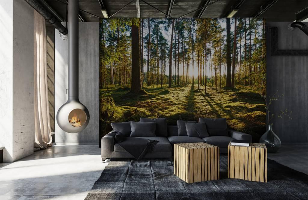 Papier peint de la forêt - Forêt de pins - Chambre à coucher 6