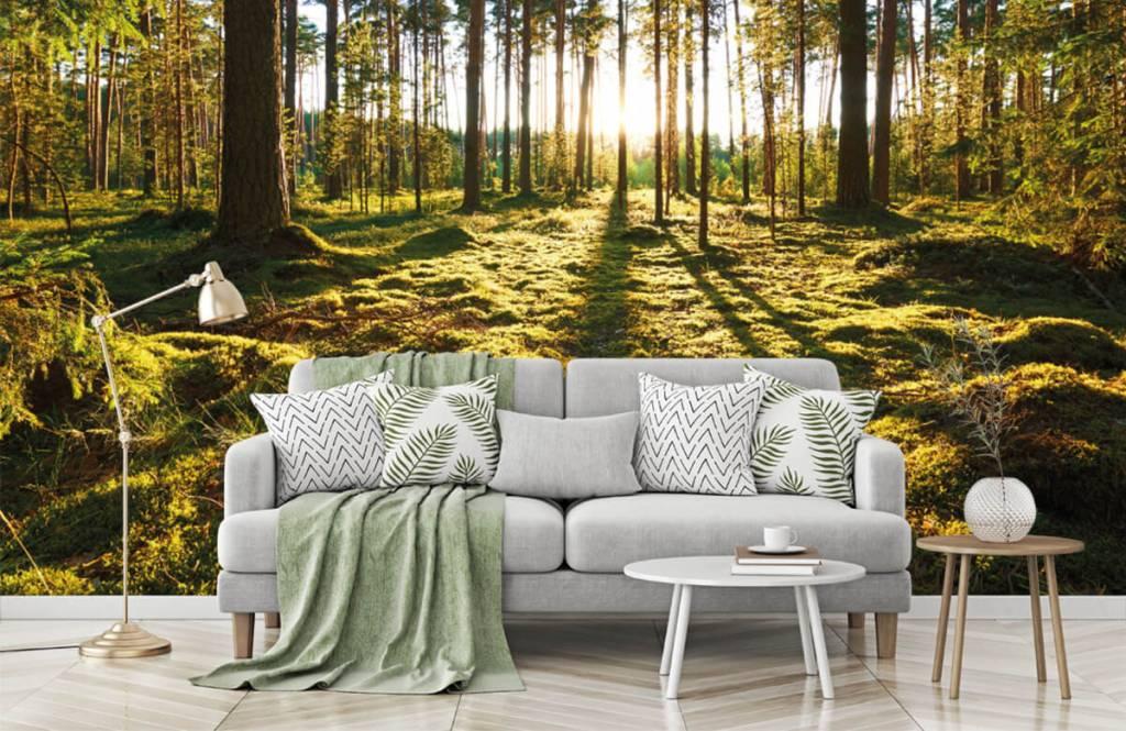Papier peint de la forêt - Forêt de pins - Chambre à coucher 7
