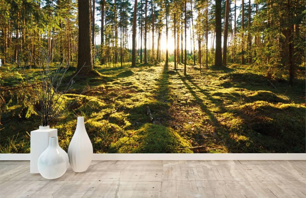 Papier peint de la forêt - Forêt de pins - Chambre à coucher 9