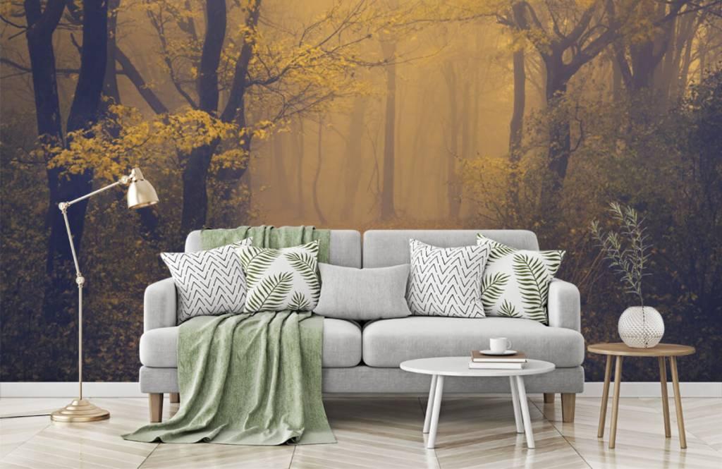 Papier peint de la forêt - Forêt sombre - Chambre à coucher 7
