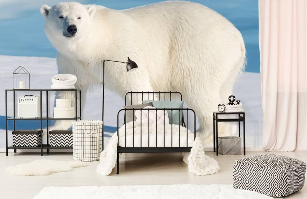 Other - Ours polaire - Chambre des enfants 1