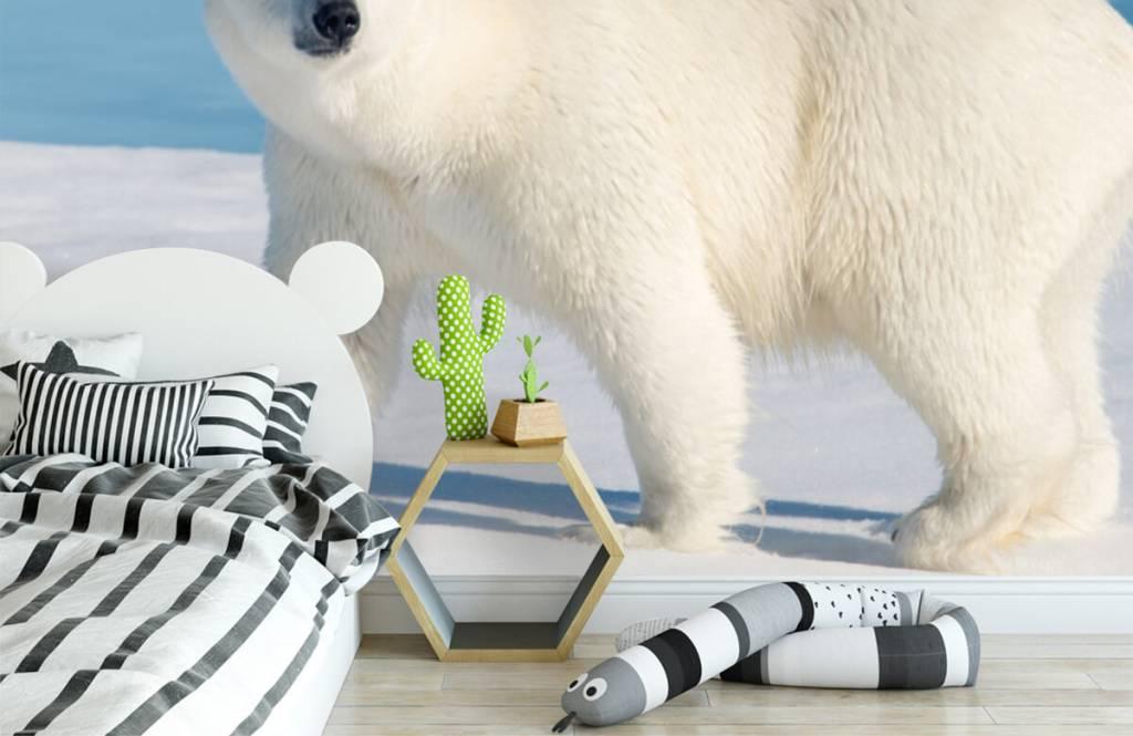 Other - Ours polaire - Chambre des enfants 2