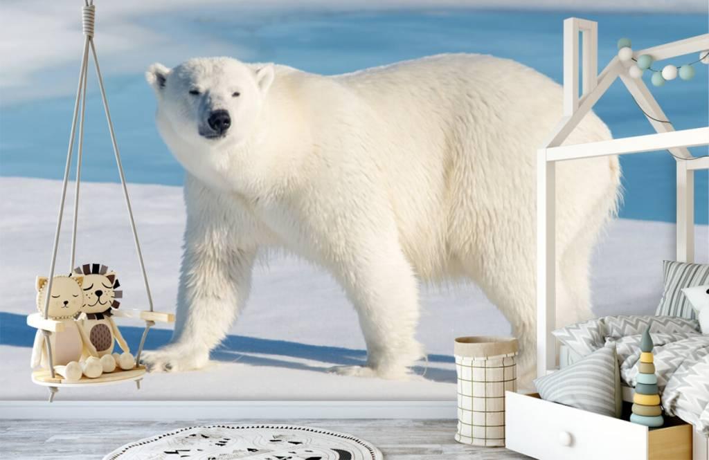 Other - Ours polaire - Chambre des enfants 3