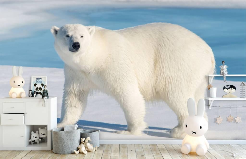 Other - Ours polaire - Chambre des enfants 4
