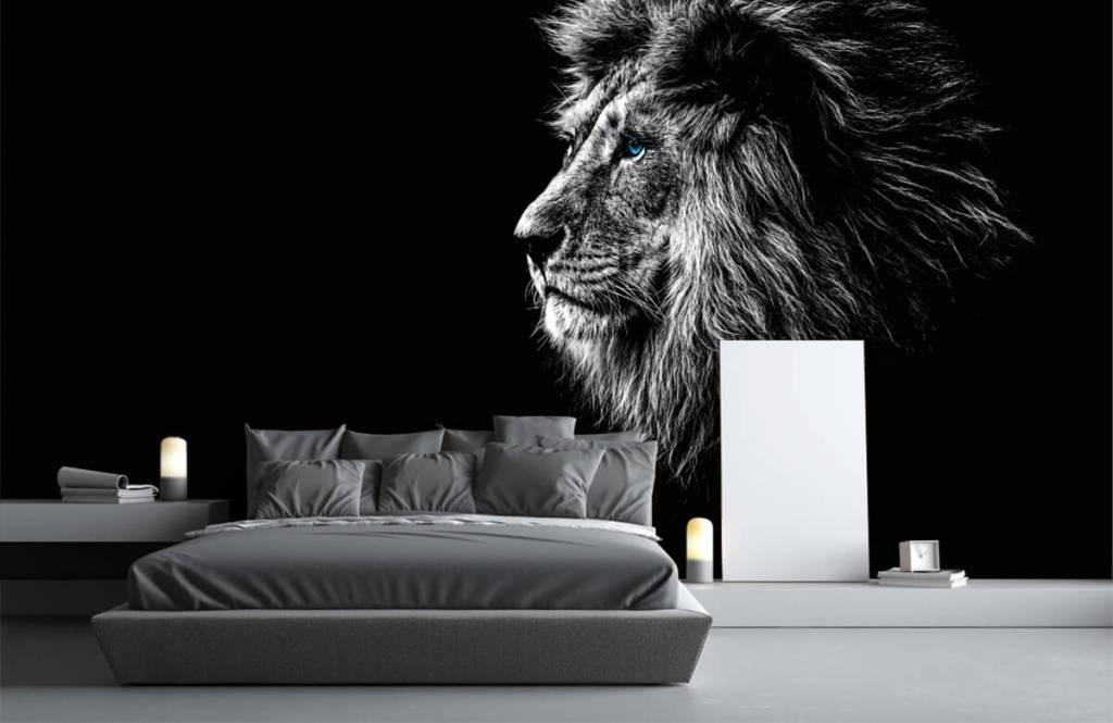 Safari Animals - Lion aux yeux bleus - Chambre d'adolescent 3