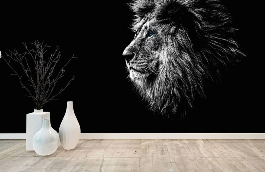 Safari Animals - Lion aux yeux bleus - Chambre d'adolescent 8