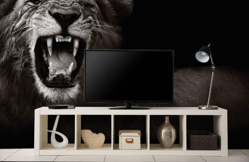 Wild Animals - Lionne - Chambre d'adolescent 5