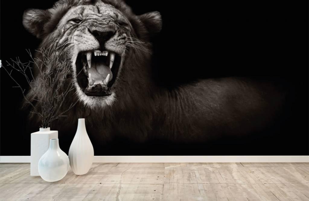 Wild Animals - Lionne - Chambre d'adolescent 8