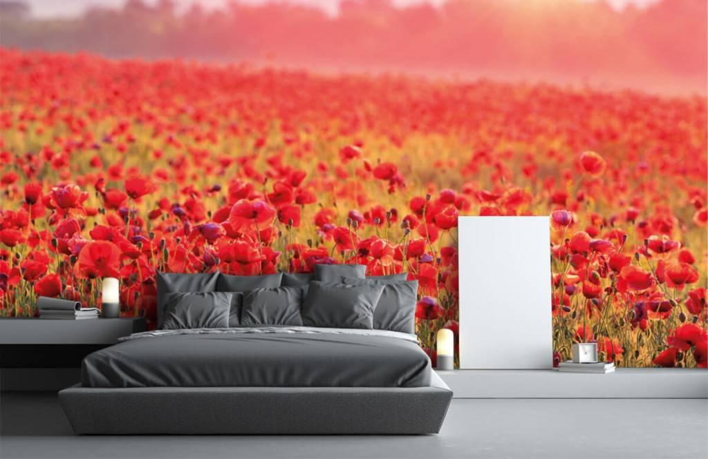 Flower fields - Champ plein de coquelicots - Chambre à coucher 1