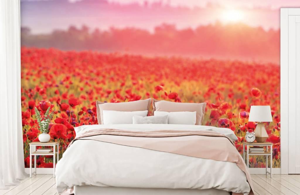 Flower fields - Champ plein de coquelicots - Chambre à coucher 2
