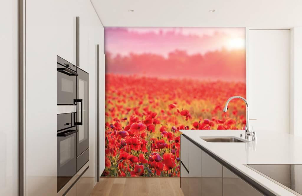 Flower fields - Champ plein de coquelicots - Chambre à coucher 3
