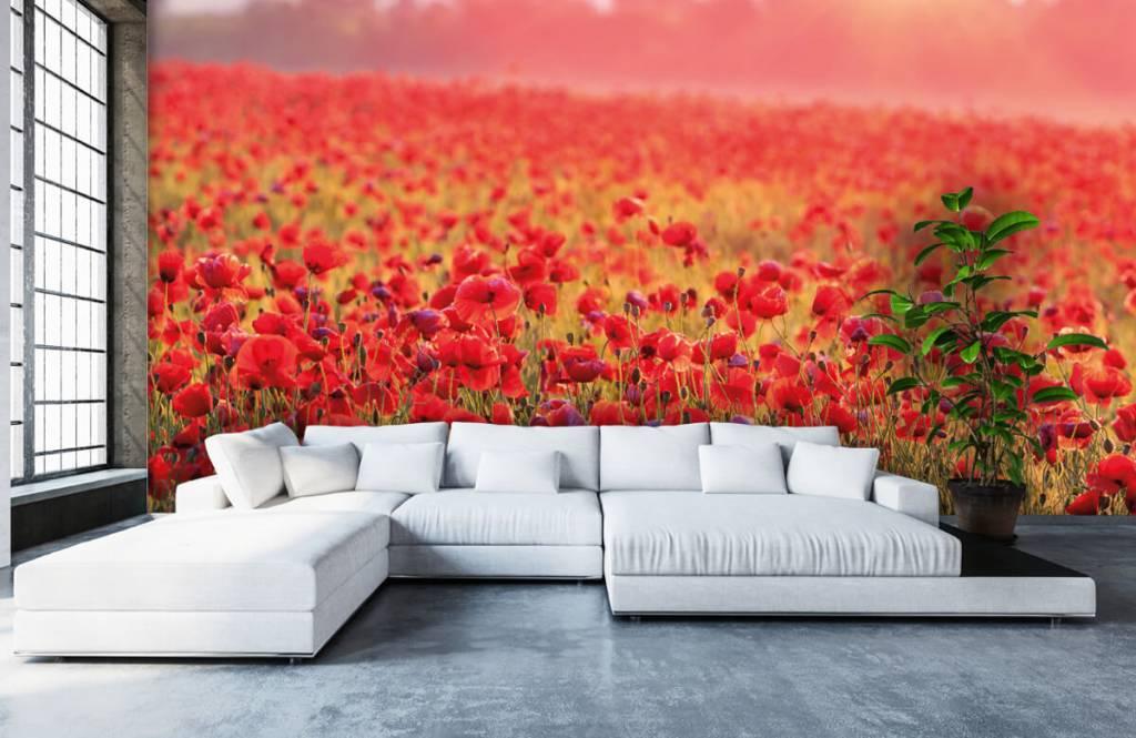 Flower fields - Champ plein de coquelicots - Chambre à coucher 5