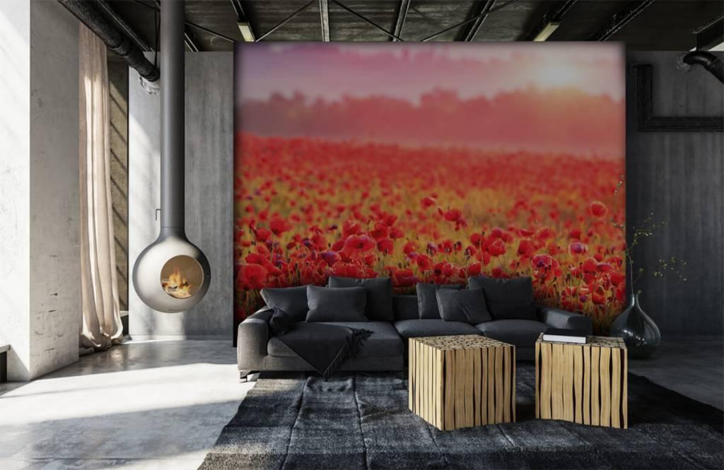 Flower fields - Champ plein de coquelicots - Chambre à coucher 6