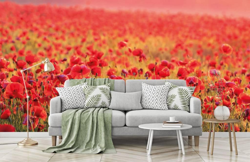 Flower fields - Champ plein de coquelicots - Chambre à coucher 7