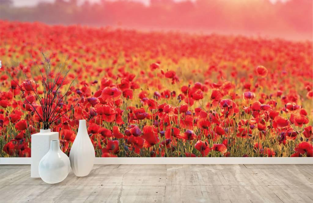 Flower fields - Champ plein de coquelicots - Chambre à coucher 8