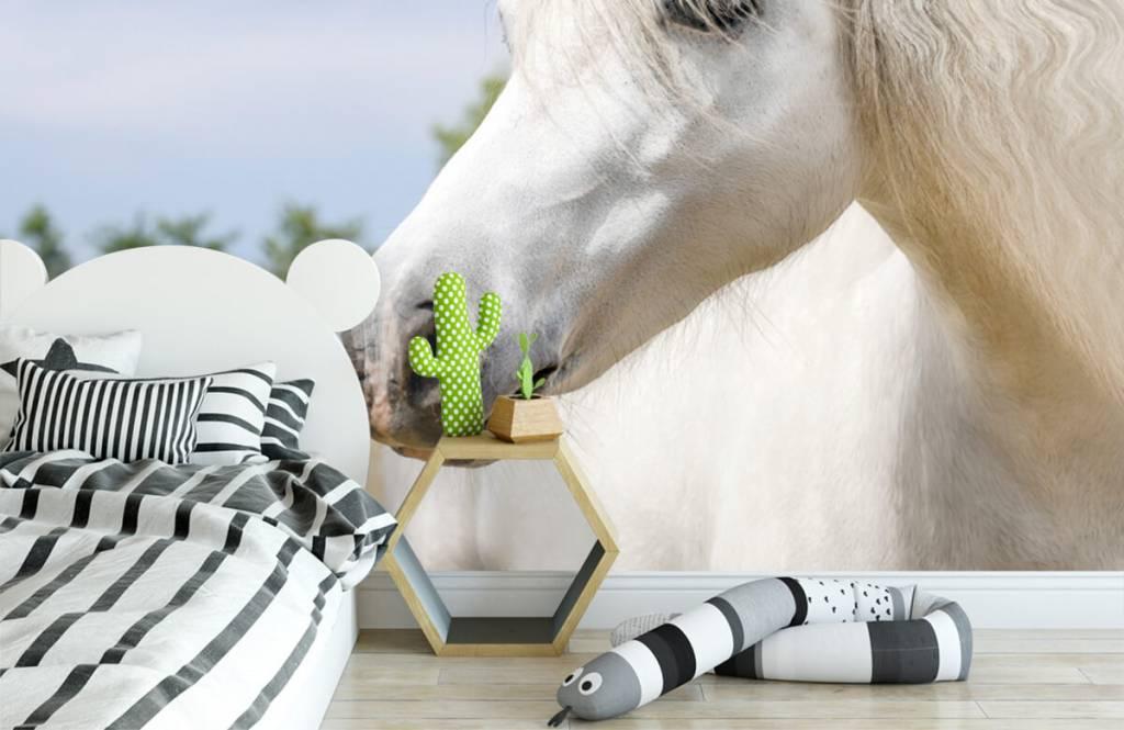 Horses - Licorne blanche - Chambre des enfants 3