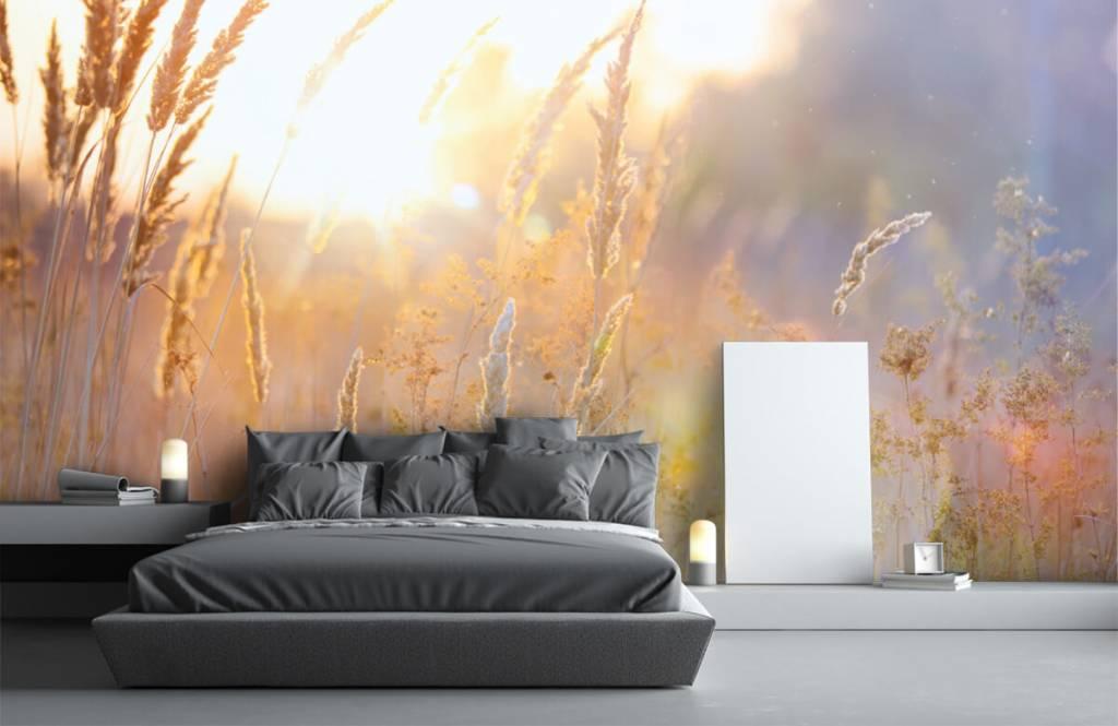 Papier peint Paysage - Champ ensoleillé - Chambre à coucher 1
