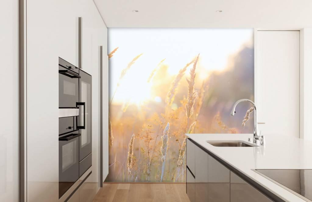 Papier peint Paysage - Champ ensoleillé - Chambre à coucher 2