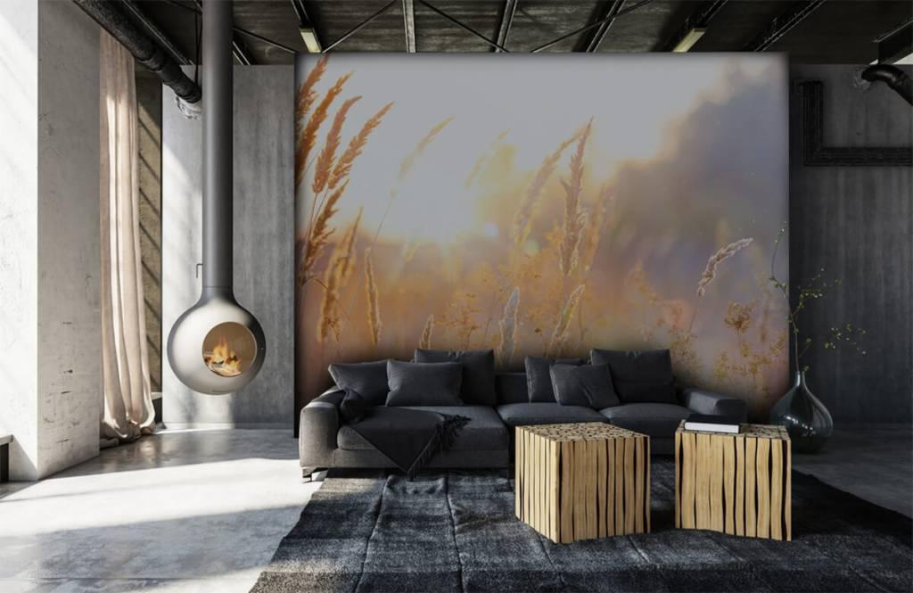 Papier peint Paysage - Champ ensoleillé - Chambre à coucher 7
