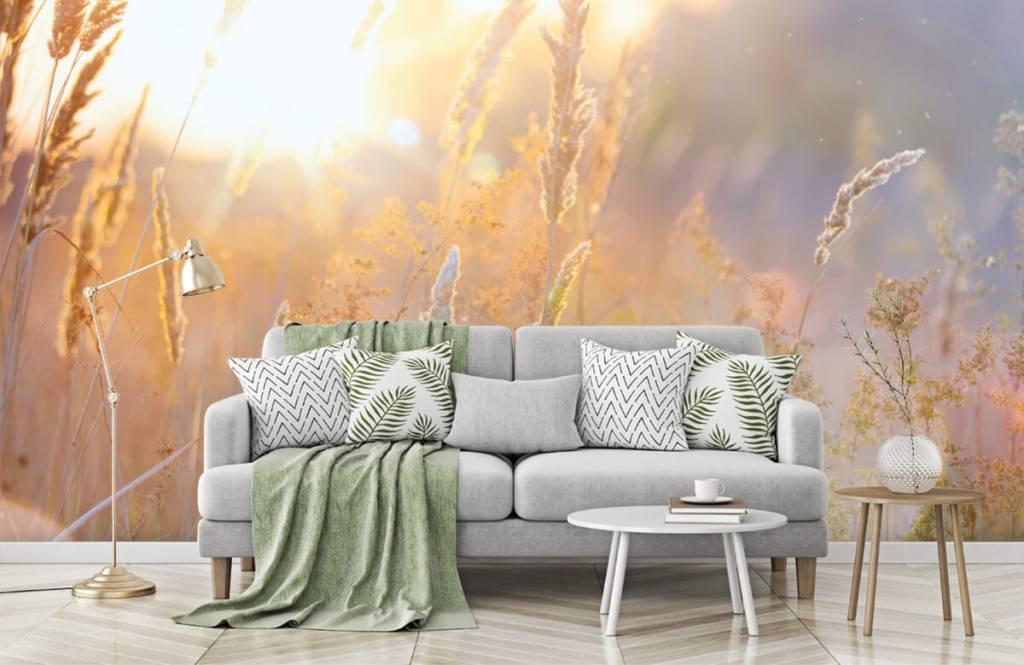 Papier peint Paysage - Champ ensoleillé - Chambre à coucher 8