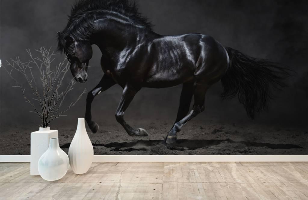Horses - Etalon noir - Chambre des enfants 1