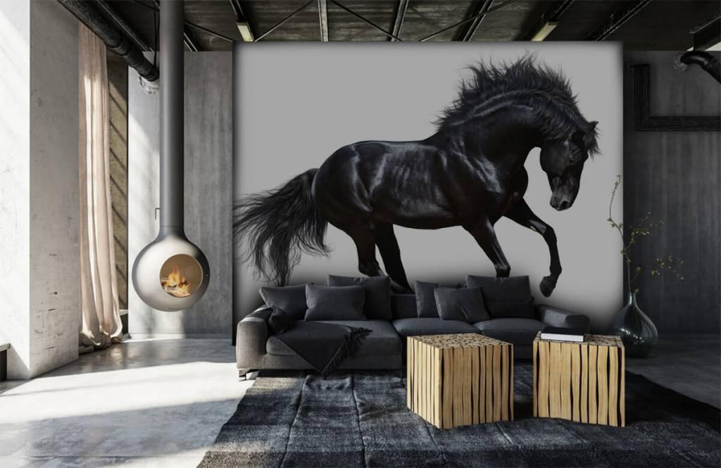 Horses - Zwarte hengst - Chambre des enfants 1