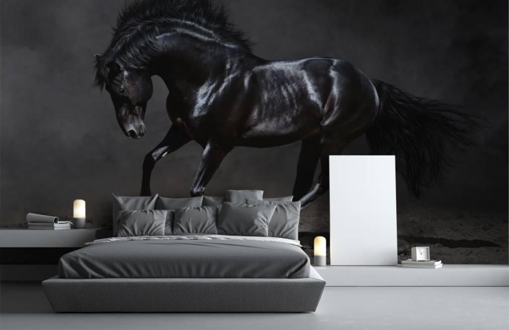 Horses - Etalon noir - Chambre des enfants 3