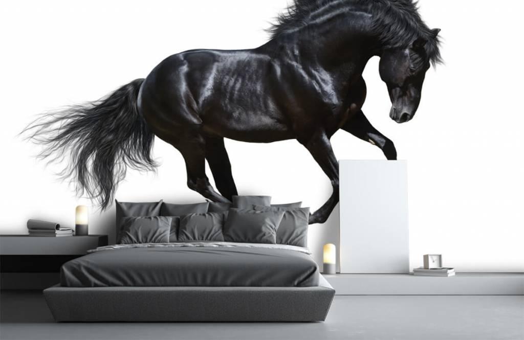 Horses - Zwarte hengst - Chambre des enfants 3