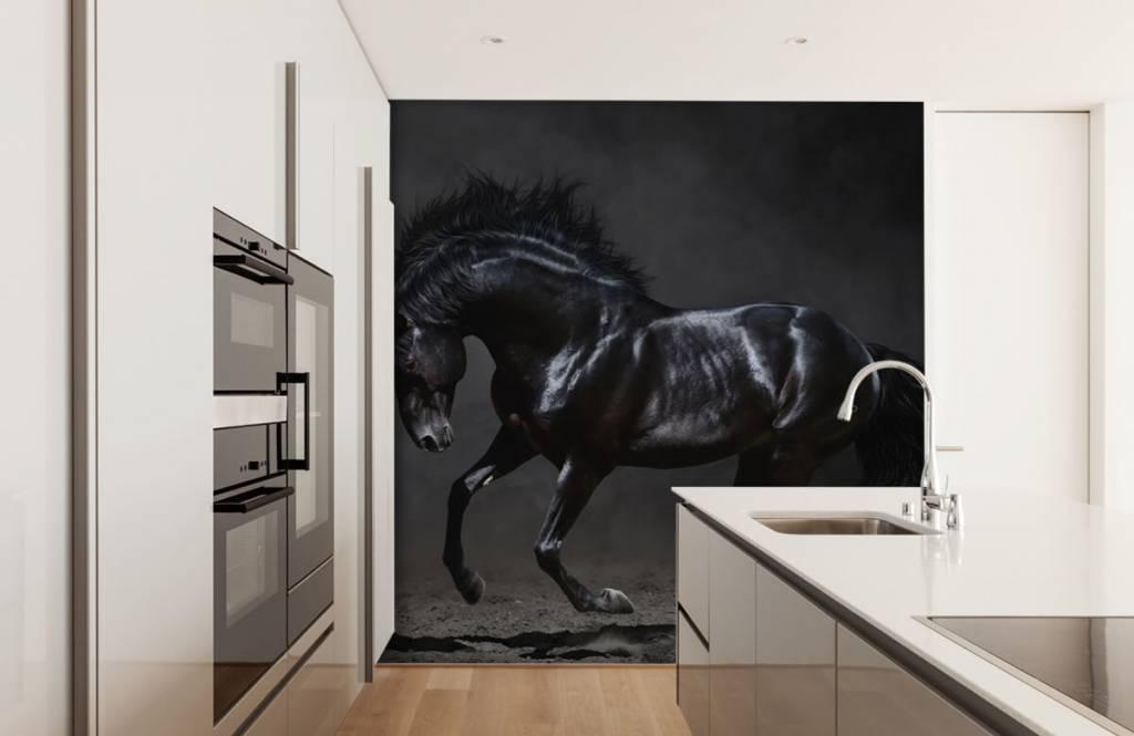 Horses - Etalon noir - Chambre des enfants 4