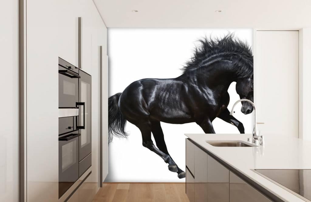 Horses - Zwarte hengst - Chambre des enfants 4