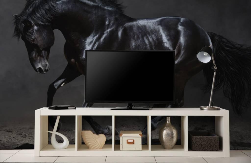 Horses - Etalon noir - Chambre des enfants 5