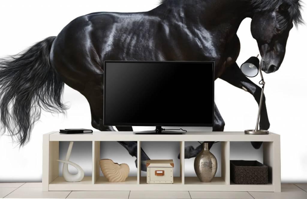 Horses - Zwarte hengst - Chambre des enfants 5