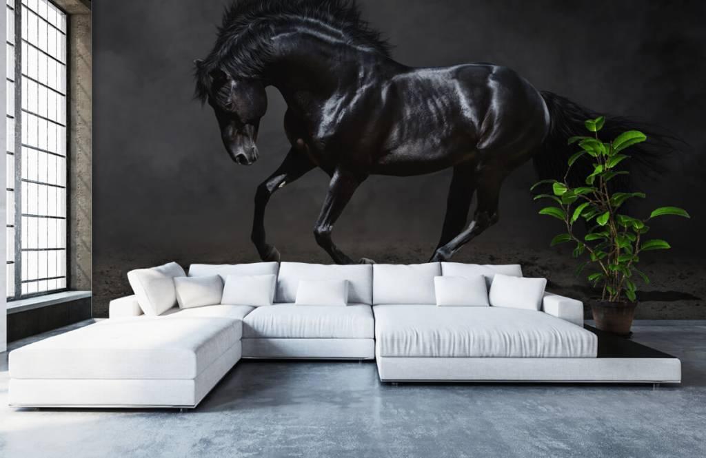 Horses - Etalon noir - Chambre des enfants 6