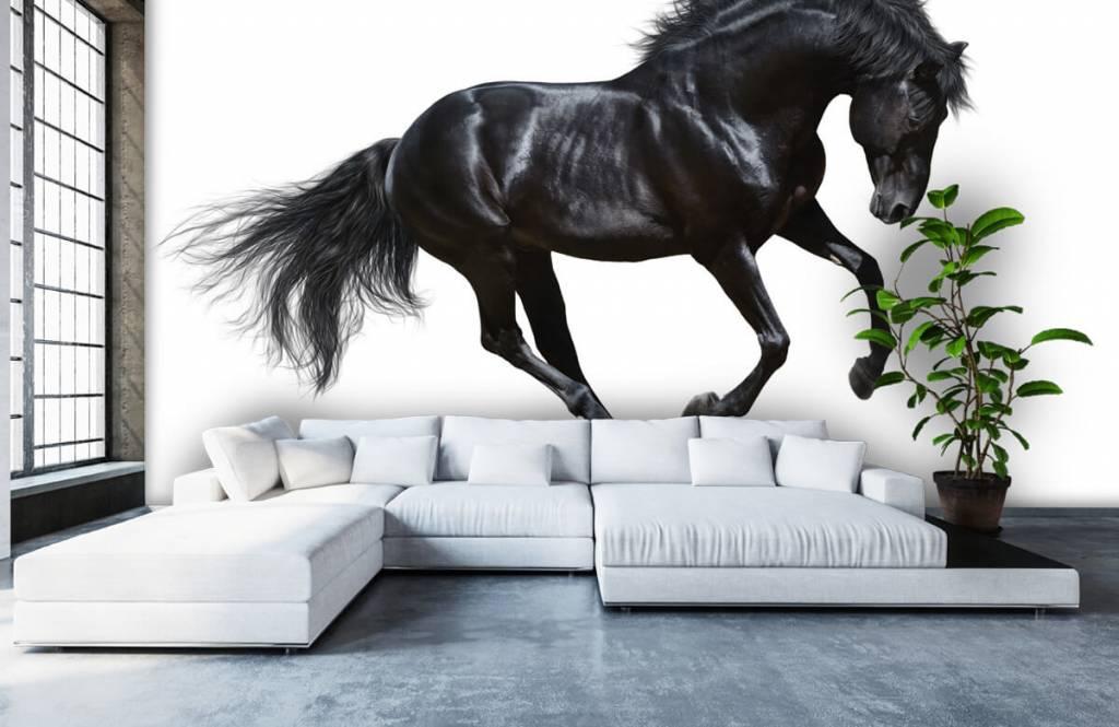 Horses - Zwarte hengst - Chambre des enfants 6