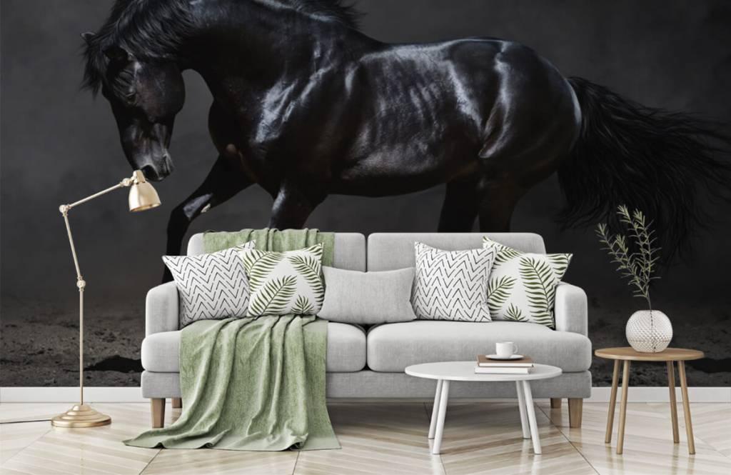 Horses - Etalon noir - Chambre des enfants 8